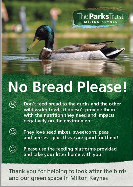 Good Food To Feed Ducks